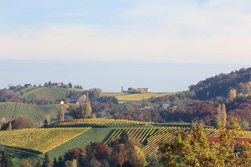 wine-austria-o